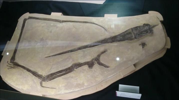 f:id:Prehistoriclifeman:20210101094137p:plain