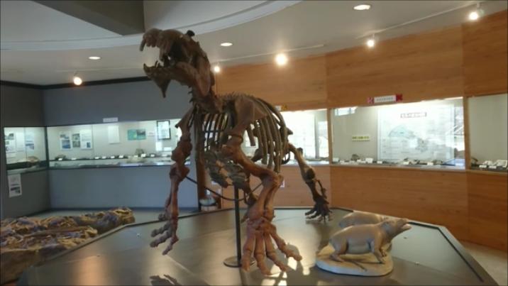 f:id:Prehistoriclifeman:20210104100642p:plain