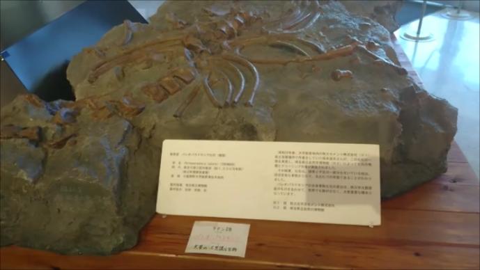 f:id:Prehistoriclifeman:20210104101810p:plain