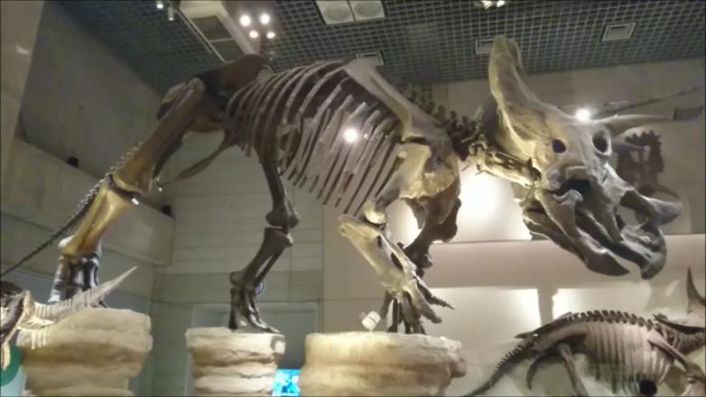 f:id:Prehistoriclifeman:20210305223832p:plain