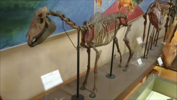 f:id:Prehistoriclifeman:20210418165308p:plain