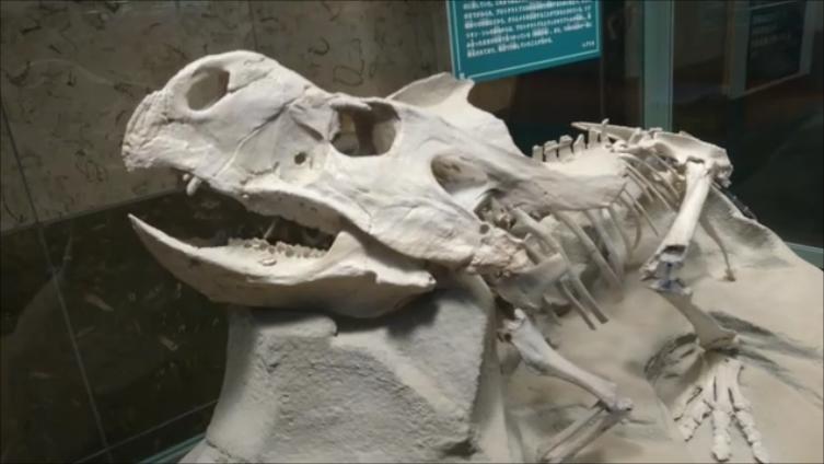 f:id:Prehistoriclifeman:20210612102112p:plain