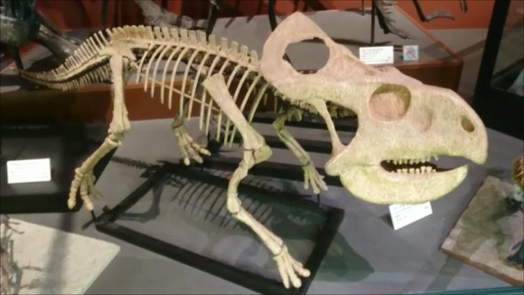 f:id:Prehistoriclifeman:20210612102206p:plain