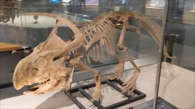 f:id:Prehistoriclifeman:20210612102605p:plain