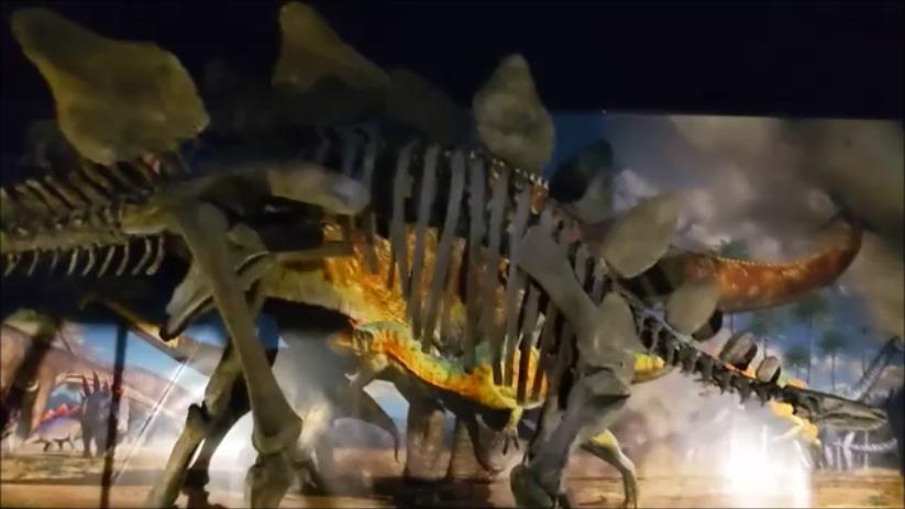 f:id:Prehistoriclifeman:20210724120246p:plain
