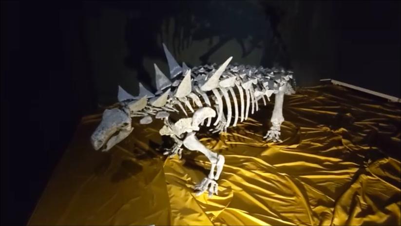 f:id:Prehistoriclifeman:20210724120619p:plain