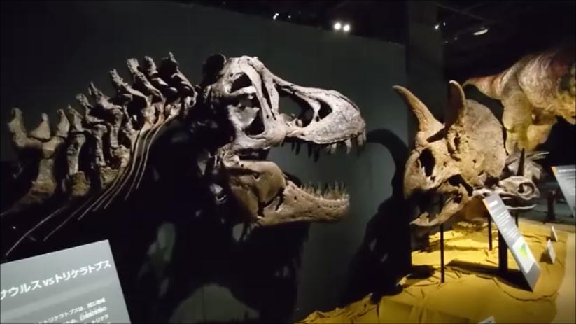 f:id:Prehistoriclifeman:20210724120926p:plain