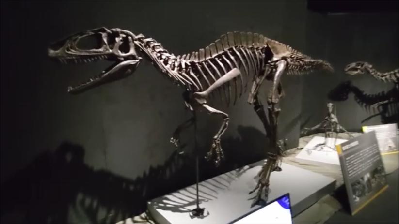 f:id:Prehistoriclifeman:20210724121029p:plain
