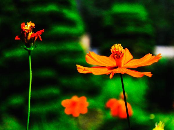 f:id:Pulin:20110815035641j:image