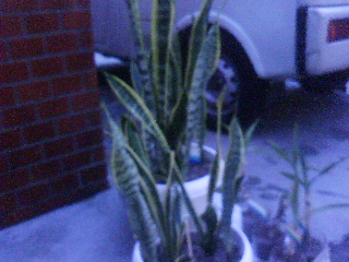 取り残された観葉植物