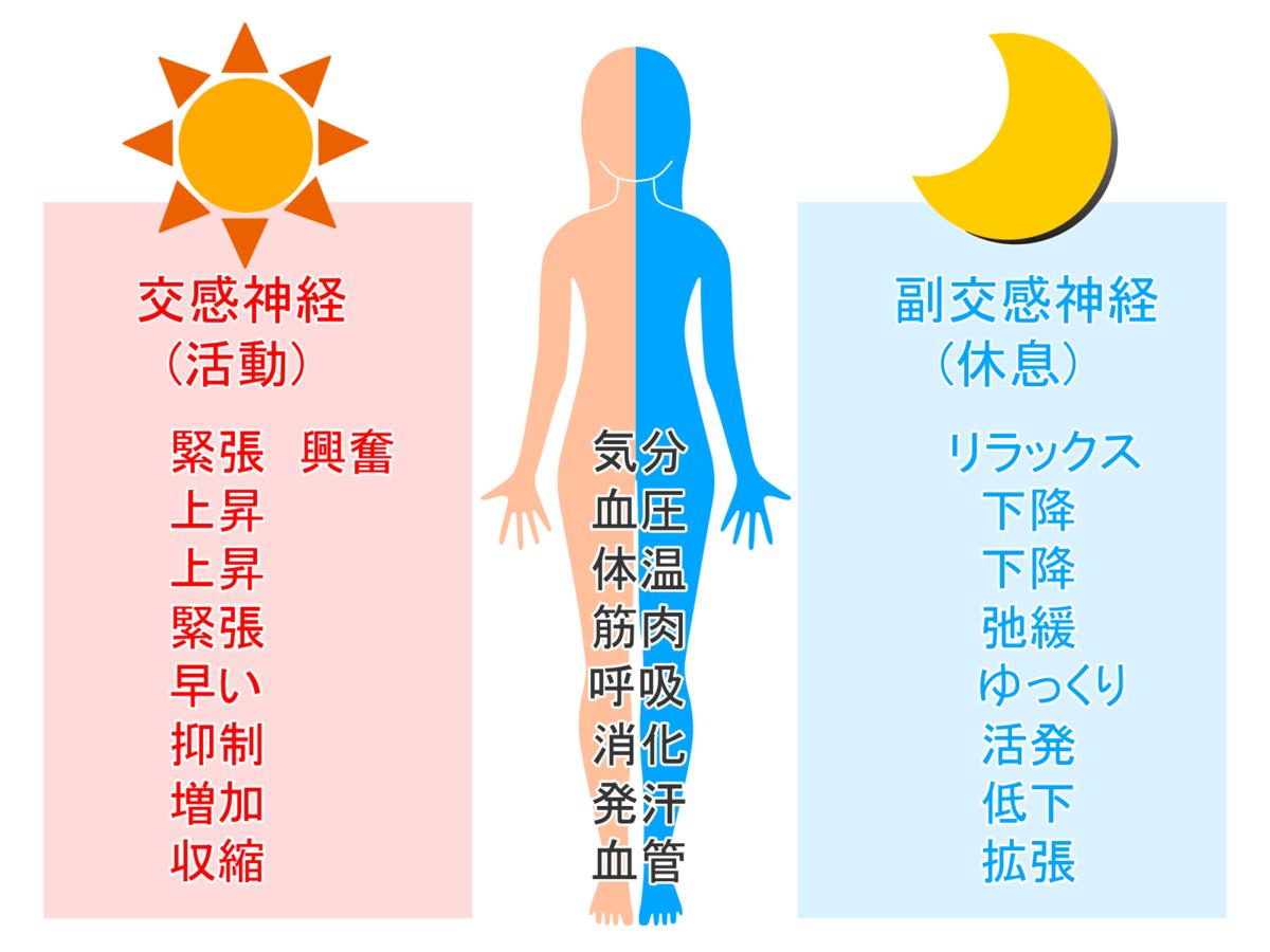 昼は交感神経が優位、夜は副交感神経が優位
