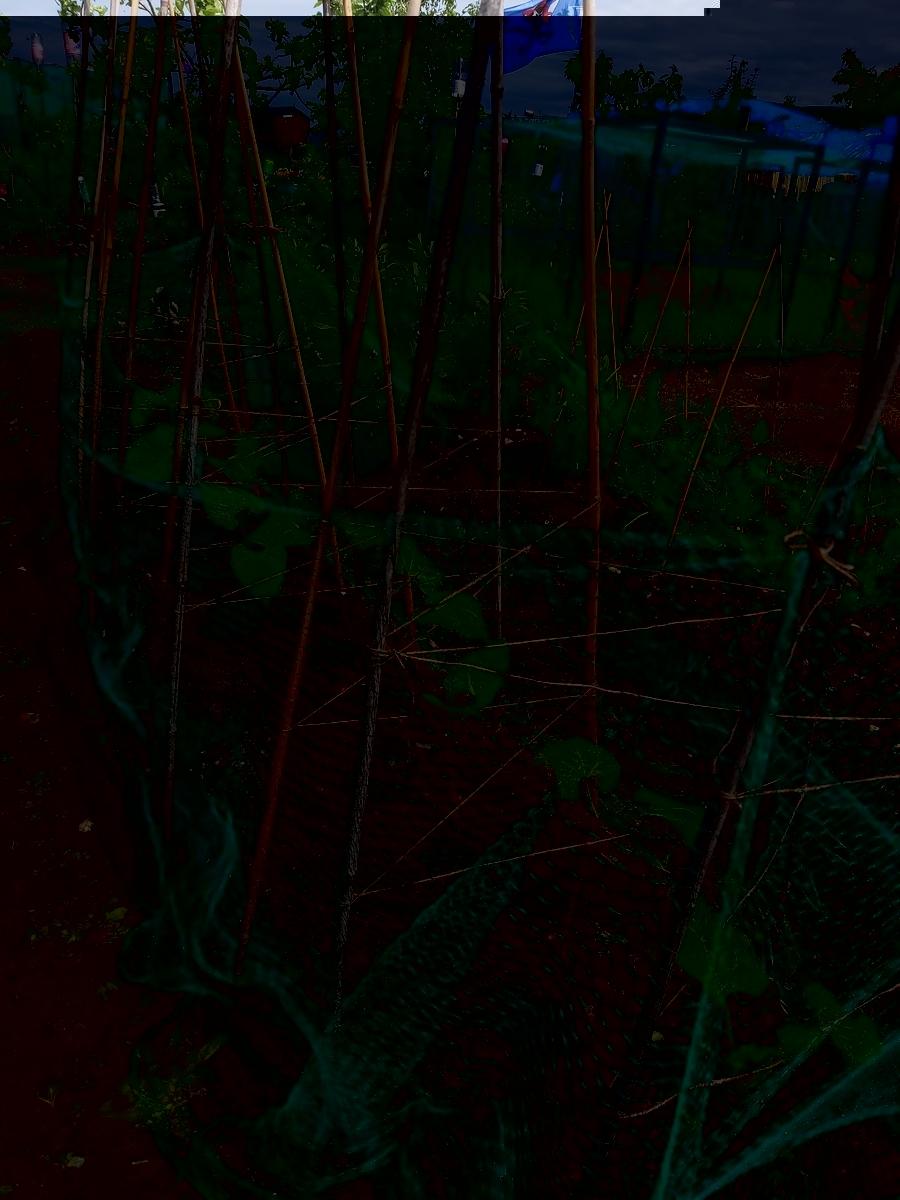 f:id:QueSeraSeraEngland:20210611041146j:plain