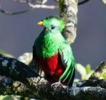 f:id:Quetzalli:20190411130649j:plain