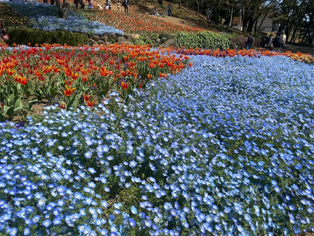 f:id:R-hanohano:20210405201026j:image