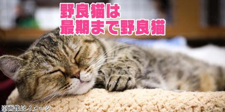 f:id:R-kun:20210425123930j:plain