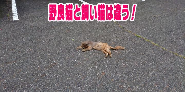 f:id:R-kun:20210527084722j:plain
