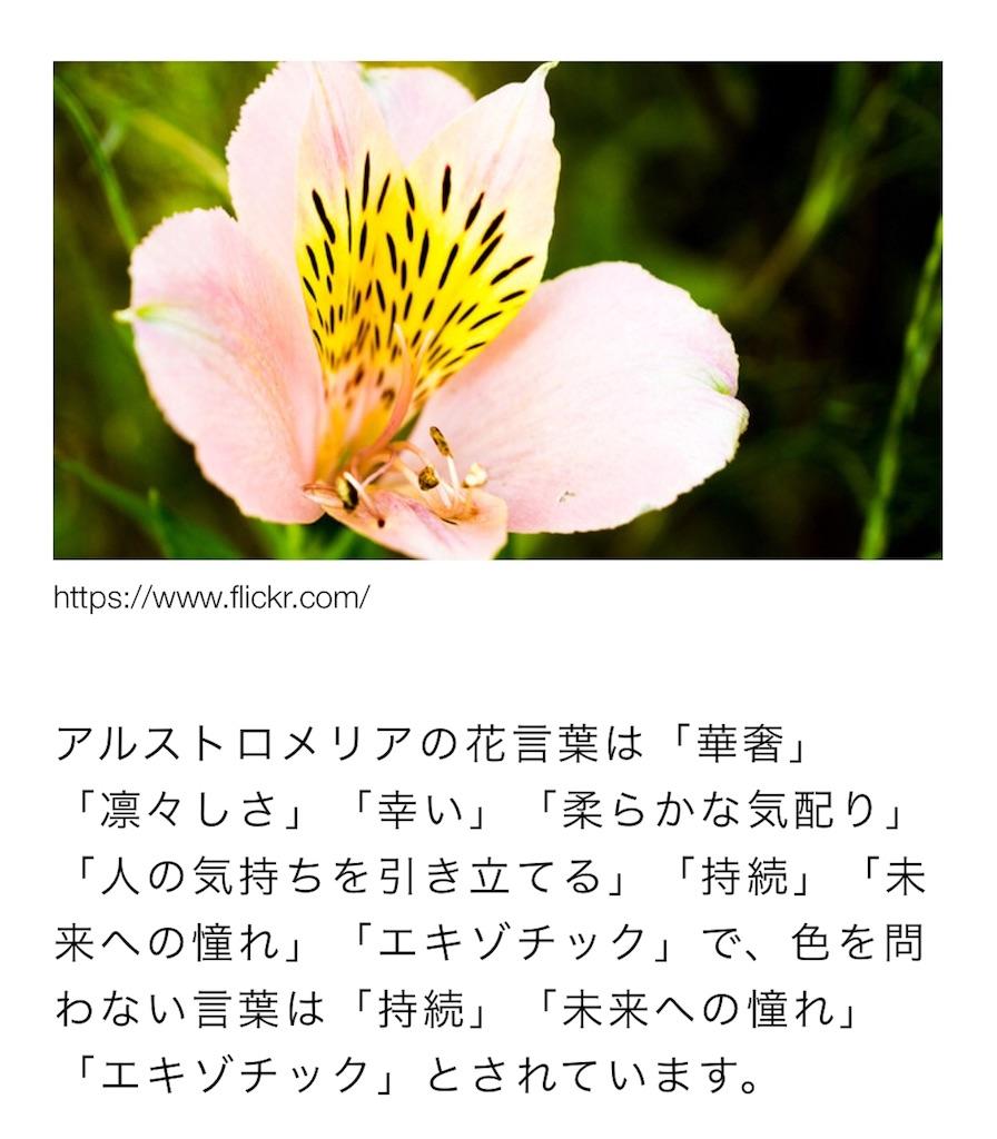 f:id:RAINBOW_Johnny:20180610060616j:image