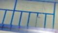 W90顕微鏡モード試写その3