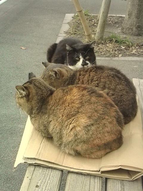 2012年12月に撮ったある広場の野良猫