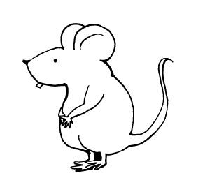 肥満のマウス実験