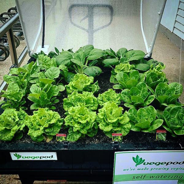 Plastic Raised Garden Bed Kits