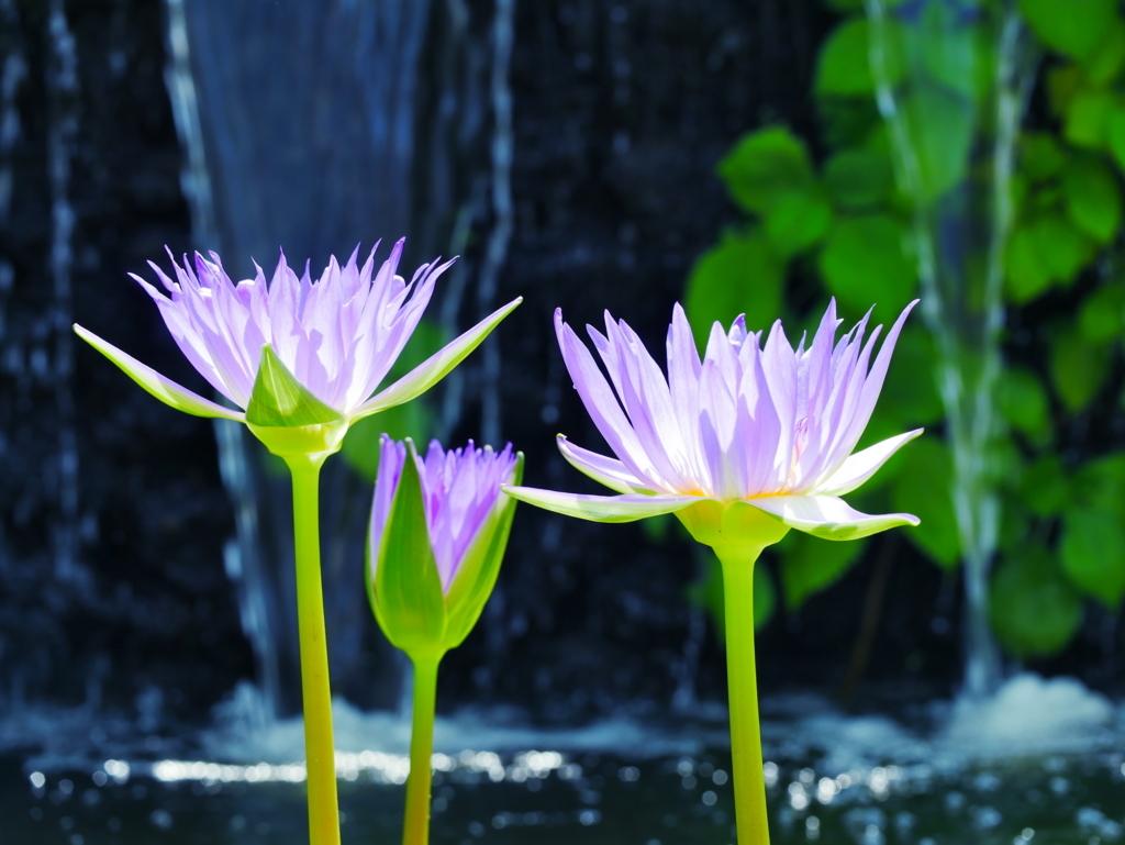 LEICA MACRO 45mm | 作例 | 目覚めの花