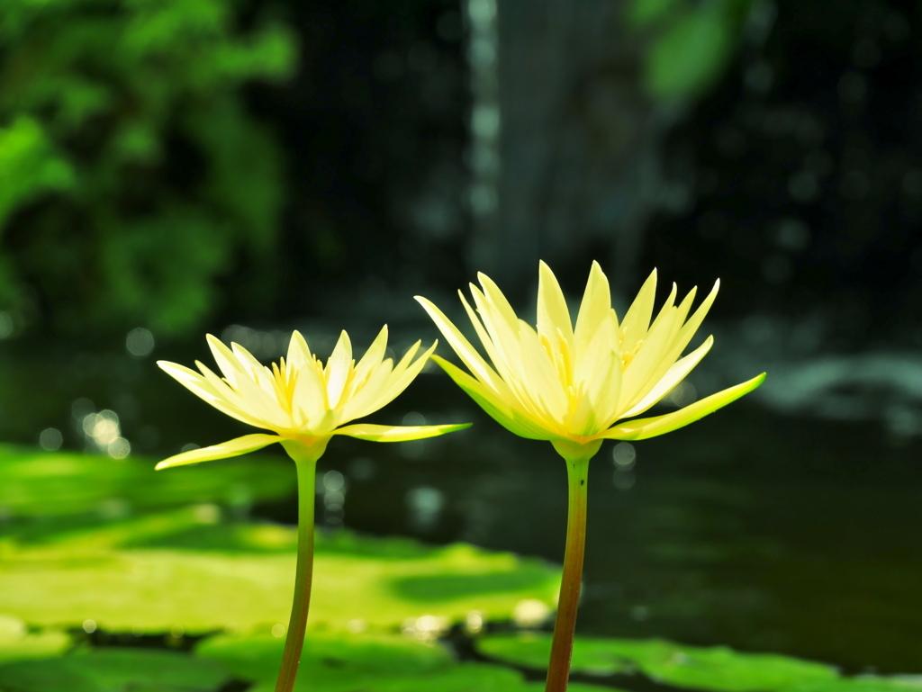 LEICA MACRO 45mm | 作例 | 金色の花1