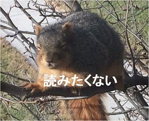 f:id:Raretsu:20200206085712p:plain