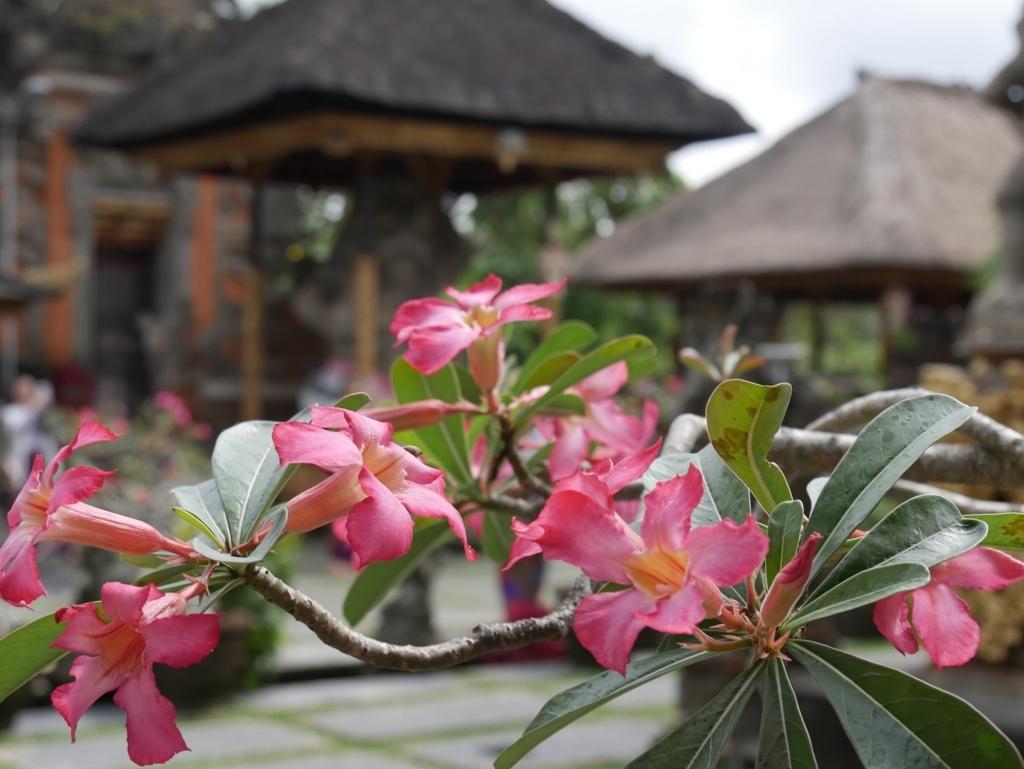 f:id:Rigel-Indonesia:20170615145153j:plain