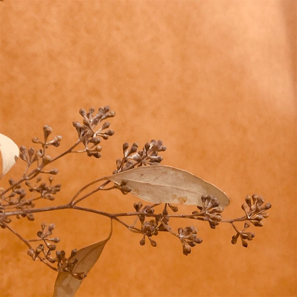 f:id:Riisflower:20200206182604j:image