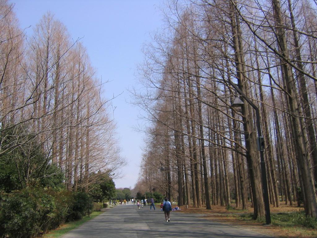 f:id:Root1_Atsushi_Saito:20170315084904j:plain