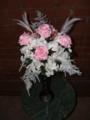Rosen-Kavalier pink
