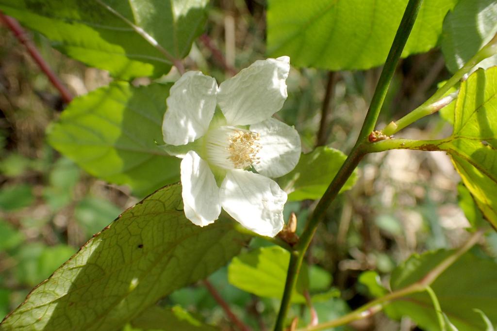 f:id:Rubus_hirsutus:20170328233908j:plain