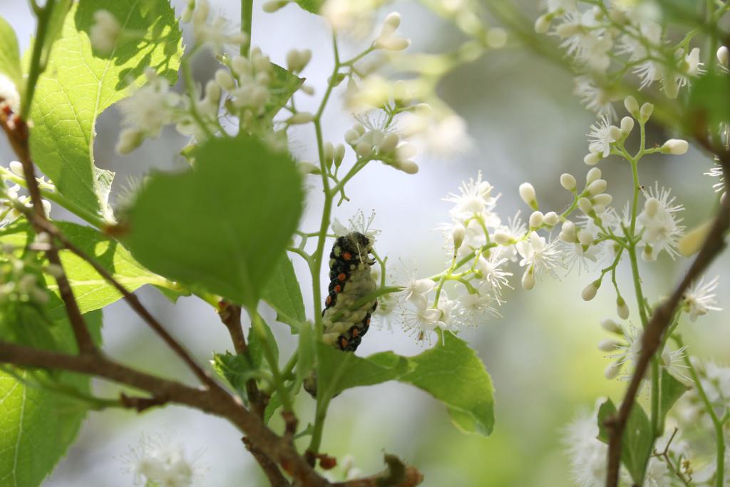 f:id:Rubus_hirsutus:20170521214103j:plain