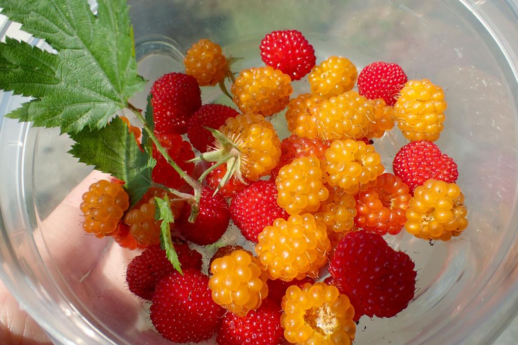 f:id:Rubus_hirsutus:20170610001907j:plain