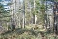 森の小道3