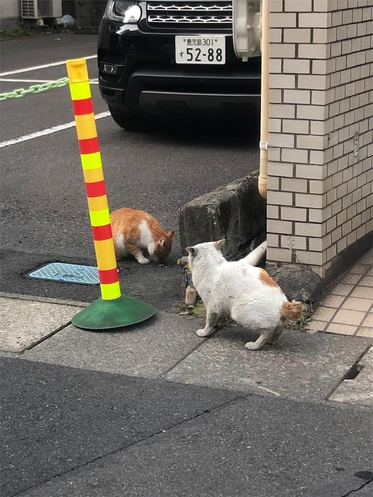 f:id:RyoKAWAGOE:20190317190859j:image