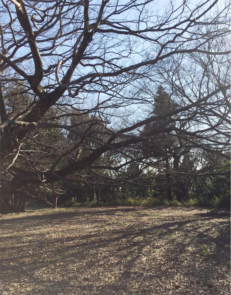 f:id:RyoKotoVuki:20170327124642j:image