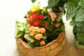 [Flowers]カランコエ4色寄せ植え
