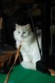 [Cat]ミモザ 東大前 2009/11/14