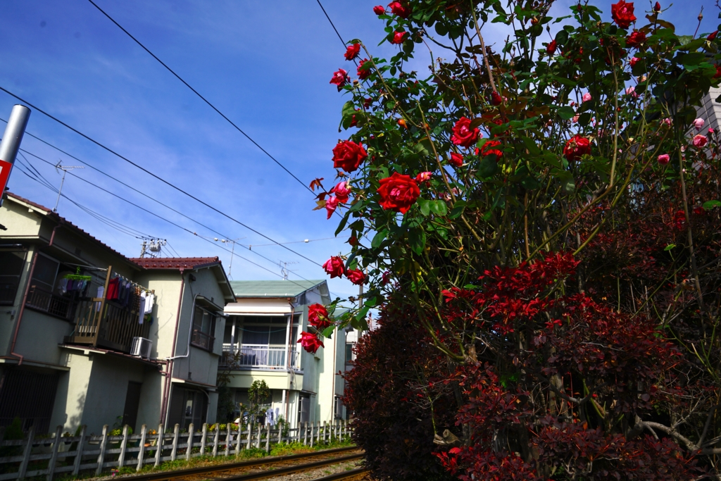 f:id:RyuYudai:20161120115453j:plain