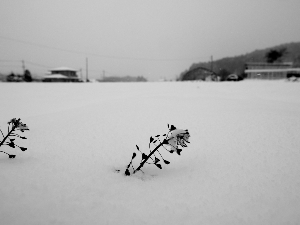 f:id:RyuYudai:20161126232557j:plain