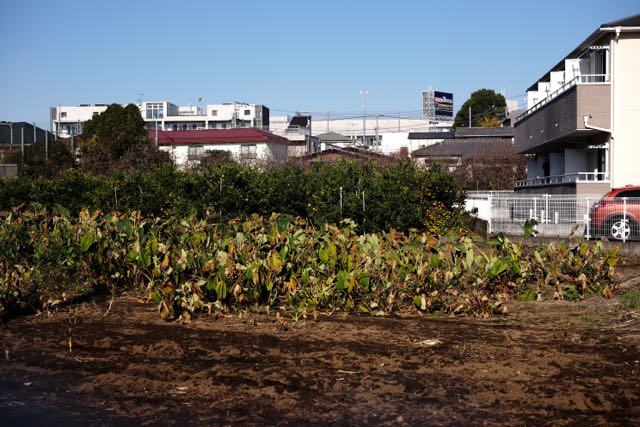 f:id:RyuYudai:20171204150824j:plain