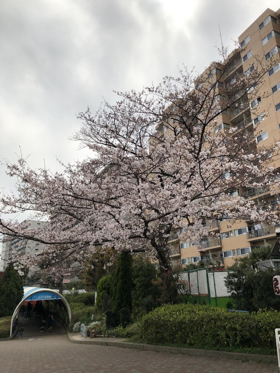 f:id:Ryugnan:20190330233723j:plain