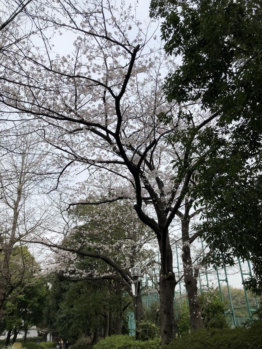 f:id:Ryugnan:20190330233752j:plain