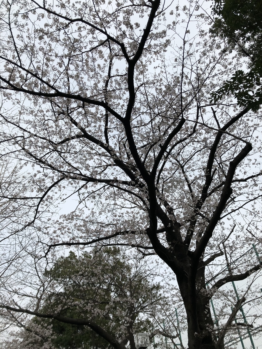 f:id:Ryugnan:20190330233815j:plain