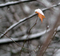 雪の木の葉