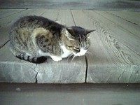 妙本寺の猫(鎌倉)