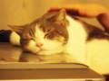 タブレットに顔を乗せて寝るのがどうも好きらしい