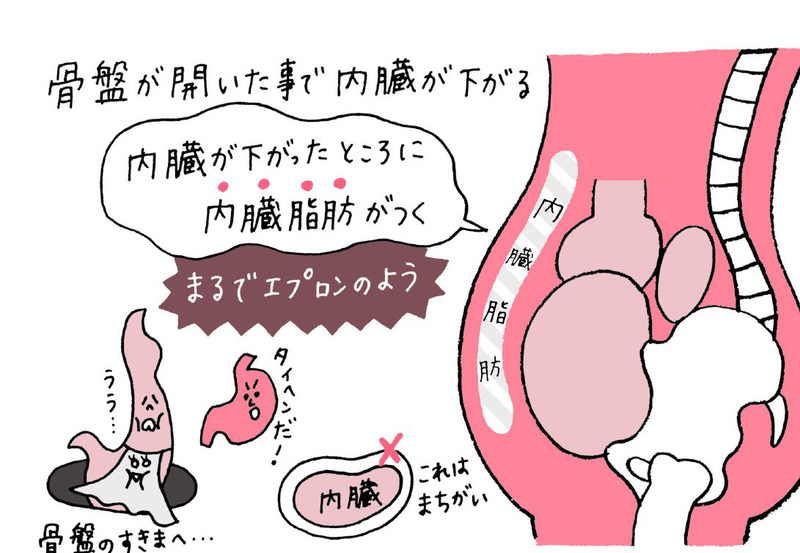 内臓脂肪は下腹メインにつく